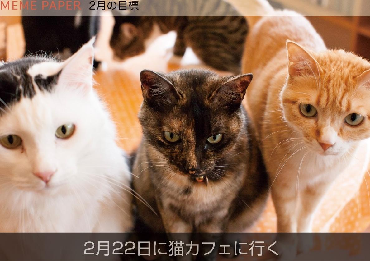 2月のカレンダー目標は猫カフェに行く!でした。